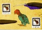 Parrot pg 37